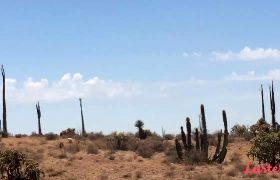 Spunky & Mr.Spunks – 248 – Alone In The Desert
